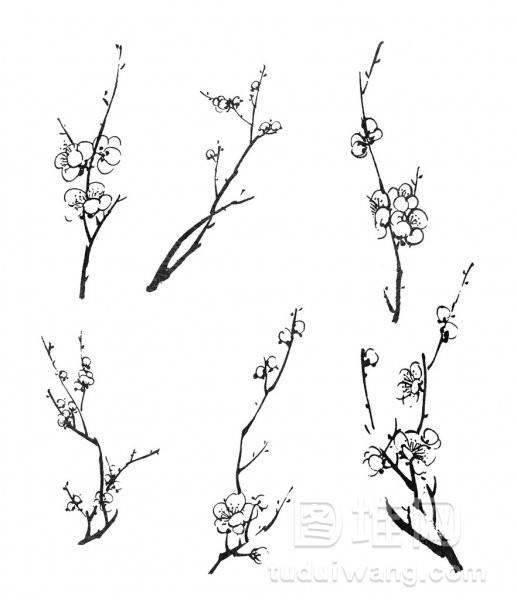 梅花绽放枝头