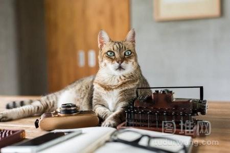 当人们在家工作时猫呆在桌上