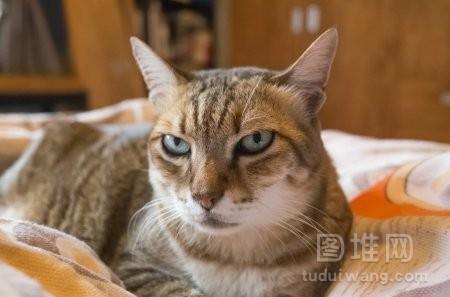 躺在床上在房子的肥猫