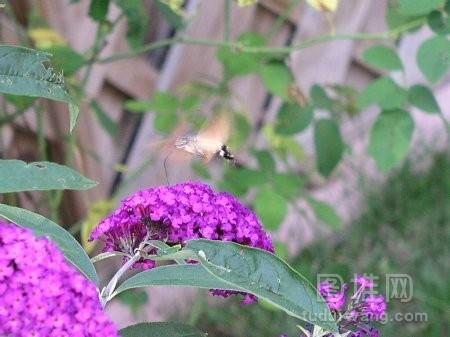 美丽的紫色薰草的风景