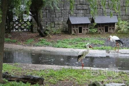 自然景观下美丽的鹤鸟