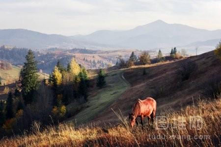 山谷中有雾的草甸马