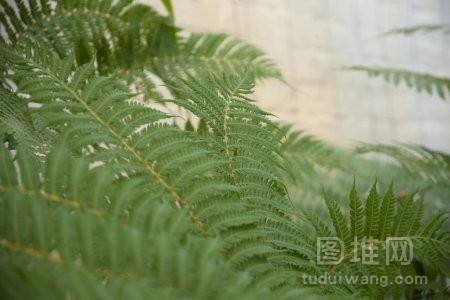 蕨类的绿叶