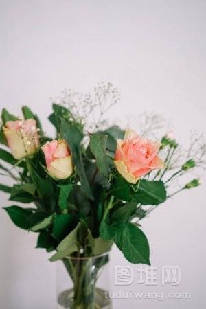 绿叶玫瑰花束